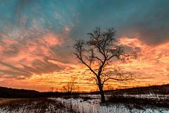 Retzer Sunrise (Sharky.pics) Tags: morning sky tree colors silhouette wisconsin clouds sunrise dawn us colorful unitedstates january waukesha 2016