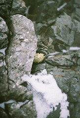 Winter Beach (Rachael.Robinson) Tags: winter snow canada color film beach 35mm island rocks fujifilm campobello