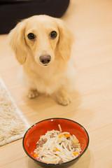 IMG_3876 (yukichinoko) Tags: dog dachshund 犬 kinako ダックスフント ダックスフンド きなこ