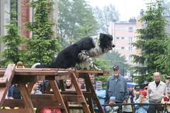 2015.09.17 - Pies na medal