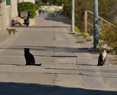 Tri make (roksoslav) Tags: cats nikon croatia dalmatia bra 2015 postira make afsnikkor70300mmf4556vr d5100