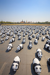 1600 Pandas in Thailand (jack-sooksan) Tags: world show park wild sculpture white abstract black cute art public ecology field animal paper french thailand temple design march model asia doll panda artist tour display outdoor bangkok decoration ground grand landmark palace exhibition 1600 event environment paulo population wat campaign eco showcase preserve mache wwf phrakaew grangeon