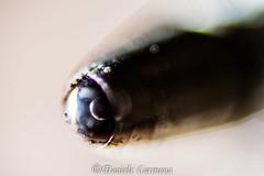 A pen (Daniele Carmona) Tags: pictures macro pen photography nikon theworldthroughmyeyes macrophotogaphy nikoncorporation mydslr nikond7100 danielecarmona