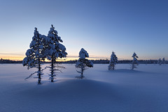 #209 Wintry Sunset (Explore 2016-03-03) (Juhani Syväoja) Tags: winter sunset sky snow tree nature pine skyline finland landscape outdoor lapland nordic wilderness scandinavia northern bog wetland mire ylitornio canoneos6d peräpohjola nuuskakaira mustiaapakaattasjärvi