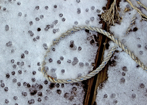 Snow Rope at Gloucester Marine Railways_3040