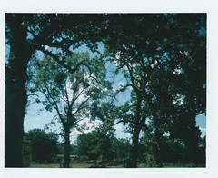 Through The Looking Glass (rayphotographs) Tags: camera old ny green film nature forest vintage polaroid cut destruction upstate down pack land savepackfilm