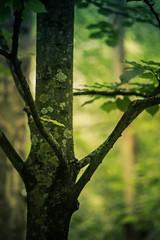 Respiro por Ti (I Breath for You) (Dibus y Deabus) Tags: park parque españa naturaleza tree nature canon arbol spain gijón asturias gijon 6d parqueisabellacatolica