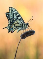 Macaon (Toni_pb) Tags: macro colors butterfly insect nikon bokeh nikkor mariposa macaon insecto 105mm macrofotografía d810 nikkor105mmmacro tonipou