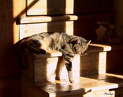 Prire de ne pas dranger (Bouteillerie) Tags: pets animal cat canon chat lumire tabby ombre marguerite flin sieste catmoments catnipaddicts bouteillerie