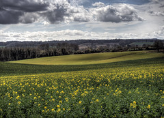 Rapeseed flowering near winchester, UK (neilalderney123) Tags: clouds rural landscape farm olympus hampshire winchester canola rapeseed olil 2016neilhoward