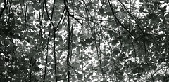 Nature's Design (setoboonhong) Tags: bw sunlight abstract tree nature leaves garden botanical evening design shadows outdoor patterns branches silhouettes melbourne textures backlighting