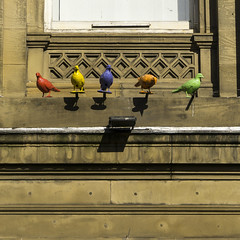 Funky Pigeons (l4ts) Tags: liverpool lancashire citycentre merseyside capitalofculture bankofliverpool colouredpigeons