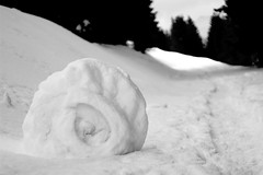 coquille de neige (glookoom) Tags: blackandwhite bw black nature monochrome montagne noir noiretblanc bokeh contraste neige blanc bois chamrousse bouledeneige