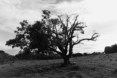 Tree (7011) (Jorge Belim) Tags: flora pb paisagem árvore 1022 canoneos50d