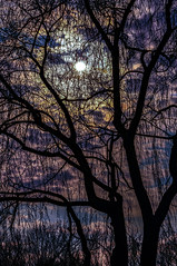 Moon in the Willow (brown cardnal) Tags: moon tree clouds branch blues fullmoon willow willowtree barebranches purples highclouds barelimbs unionparkclouds