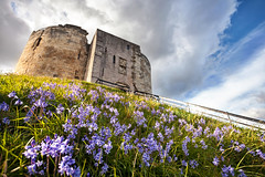Clifford's Tower Bluebells (matrobinsonphoto) Tags: york city flowers blue light sunset sky plants sun sunlight flower building tower castle history nature beautiful grass bluebells architecture golden town skies purple yorkshire hill north chinese dramatic historic hour keep mound bluebell invasive cliffords