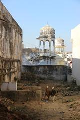 Through The Ruins (cartographerofdreams) Tags: old dog india dogs ruins ruin pushkar incredible