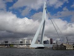 Rotterdam: Erasmusbrug (harry_nl) Tags: bridge netherlands rotterdam nederland brug erasmusbrug zwaan nieuwemaas 2016 unstudio benvanberkel