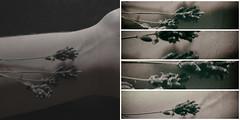 Nascere (Moonphotographer ☽◯☾) Tags: flowers nature hand double silence elianascalise