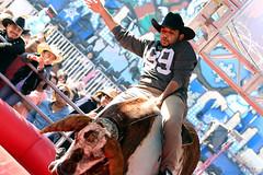 Houston Rodeo - Mechanical Bull Ride (jan buchholtz) Tags: carnival urban cowboy texas ride candid houston bull rodeo rider mechanicalbull houstonlivestockshowandrodeo houstonrodeo janbuchholtz
