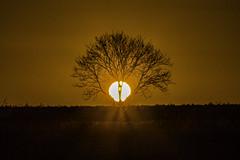 The Last Rays (ianandbarbara.bonnell@btinternet.com) Tags: tree sthelens merseyside billinge