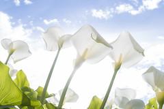 loreak_ (Iurgi.) Tags: sky sun flower sol contraluz cielo loreak