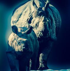 Indisches Panzernashorn (roland_lehnhardt) Tags: blue animals munich zoo tiere dof cross bokeh indian blau tierpark rhinoceros hellabrunn indisches unicornis panzernashorn naturemasterclass