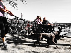The Tugger (TMimages PDX) Tags: street city bridge people urban dog pet water monochrome animal marina river portland table geotagged photography photo waterfront image streetphotography streetscene sidewalk photograph pacificnorthwest fineartphotography iphoneography