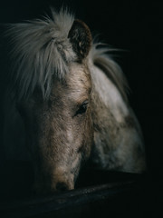moment (MakiEni777) Tags: horse animal japan hokkaido stable
