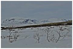 vinterfjell (KvikneFoto) Tags: norge vinter natur landskap
