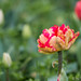 """2016_04_17_Floralia_Bxl-45 • <a style=""""font-size:0.8em;"""" href=""""http://www.flickr.com/photos/100070713@N08/26509458545/"""" target=""""_blank"""">View on Flickr</a>"""