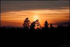 Solnedgng (Jonas Thomn) Tags: sunset sky orange clouds forest dark evening himmel skog sunsetting solnedgng moln kvll mrkt