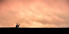 enjoying the company. (lucidddreamin') Tags: sunset silhouette clouds rural australia victoria kangaroo roo goldenhour