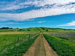 A trail at Tolay Lake Regional Park (harminder dhesi photography) Tags: park trees sky green nature clouds landscape outdoors hiking sonoma hills trail bayarea petaluma sonomacounty norcal c3 vsco snapseed vscocam