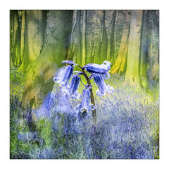 Woodland Spring (gerainte1) Tags: wood flowers blue bluebells spring yorkshire layers