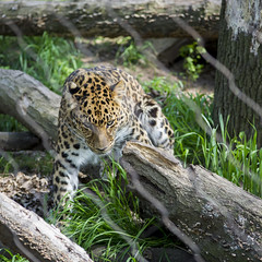 70.0-210.0 mm f-4.0-5.6(_NDS2563)----(_DSC5365) (gnuelkevin) Tags: animal island zoo spring staten 2016