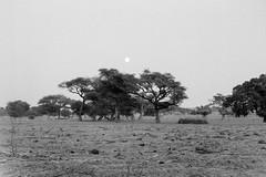 tramonto nel Mali (Alberto Cameroni) Tags: africa blackandwhite bw nikon tramonto kodak scanner bn mali negativo biancoenero fm2 bandiagara pellicola kodak5062px celluloide kodakpx primefilm kodak5062