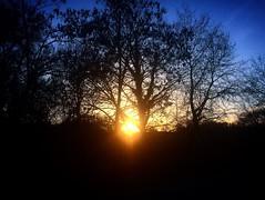 Photo by kostas smalis Kastoria Greece (the silence of sun) (smalis kostas) Tags: blue sunset sky sun black tree apple yellow 35mm greek photography photo nikon picture hellas photographers greece nikkor iphone kostas 5s kastoria μπλε ελλάδα ouitdoor μαυρο κιτρινο d5200 σκοταδι καστοριά φωσ ουρανοσ ηλιοσ δενδρο κλαδια smalis 18140mm μλπε ηλιοβαλεμα