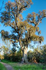 _DW21180_HDR-2.jpg (Upstate Dave) Tags: fountainebleaustatepark louisiana people eileenwilliams oak 2015 liveoak trees