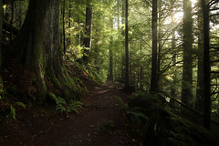 The richness of light...... (McCoy352) Tags: trees light fern green washington shadows hiking trail seeing pacificnorthwest curiosity olympicnationalforest