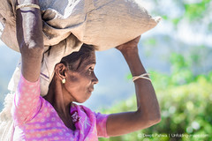 tea plucker, ella, srilanka (deeptipahwa) Tags: portrait people asia tea ella srilanka ceylon hillcountry kandy southasia teaestate nuwaraeliya teaplucker teapalntation