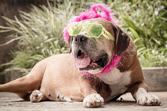 Carnaval (Vinicius_Ldna) Tags: carnival brazil dog pet love canon 50mm carnaval care caress londrina 10652 0652