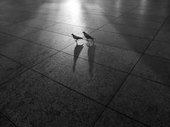 DSCF0447 (Neil Johansson LRPS) Tags: uk light england urban blackandwhite bw white black monochrome birds liverpool dark landscape photography photo noir fuji shadows northwest pavement pigeons photograph fujifilm x30 merseyside fujifilmx30
