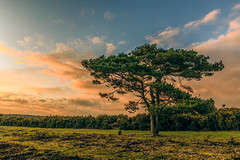 NewForest-Bratley-View-2.jpg (hampshireview) Tags: sunset sky grass clouds forest canon nationalpark hampshire orangesky sunburst newforest 6d bratleyview