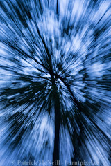 Abstract Set Four - 5 (burntpixel.ca) Tags: blue trees canada abstract black tree art nature beautiful vertical rural canon spectacular evening photo movement twilight zoom fine patrick manitoba photograph 6d mcneill burntpixel canon6d wrench777