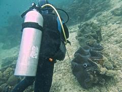 Giant Clam 2 (someofmypics) Tags: vacation philippines bikini manila scubadiving wickedweasel ikelite panasonictz60