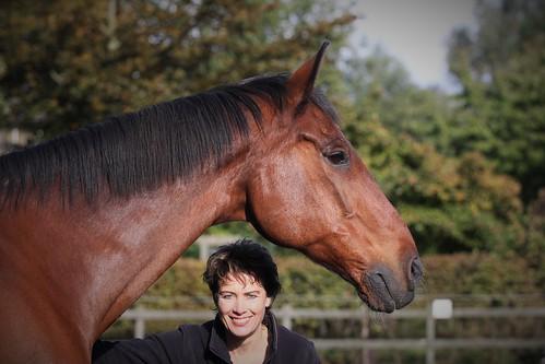 Horses Insight  (16)