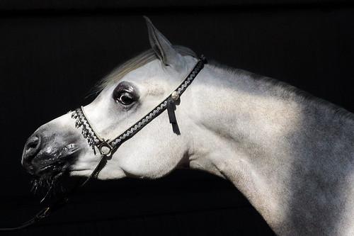 Horses Insight  (5)