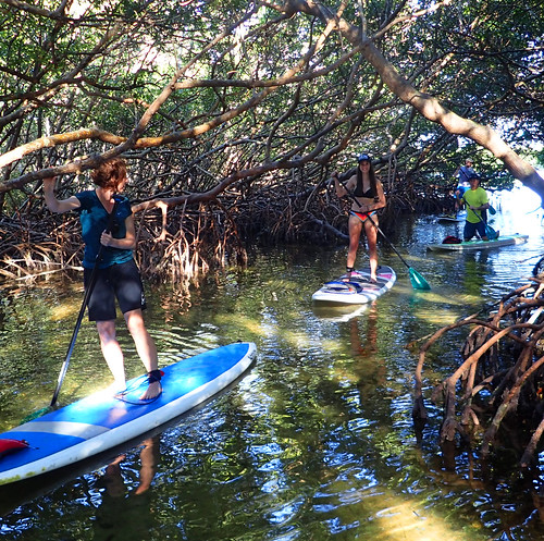 2_17_16 Kayak Paddleboard Tour Sarasota FL 17