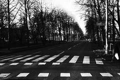 (jean_pichot1) Tags: street trees bw contrast crossing gothenburg